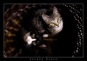 Two Brothers... by sergey1984