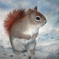 Winter Squirrel by ZsofiaGyuker