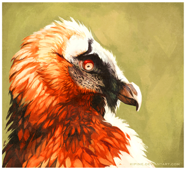 Bearded Vulture by Kipine