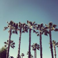 Palms by Tithos