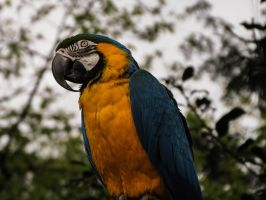 Parrot 3 by mrscats