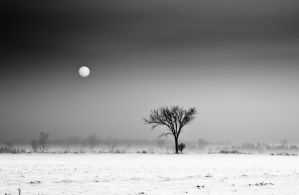 The Simplicity of Winter by DerekToye