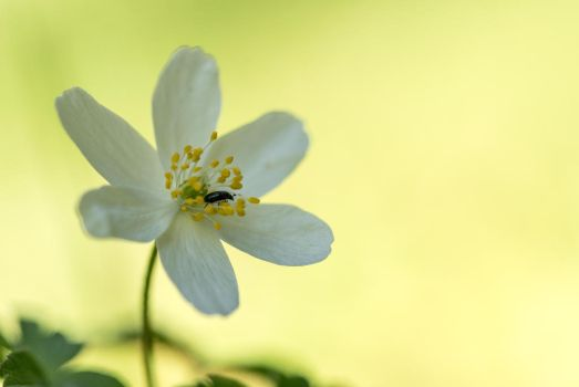 Host in the flower by ericdufour-Photograp