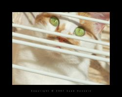 Cat 17 by eyadness