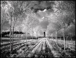 Infinity infrared... by MichiLauke