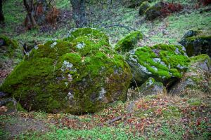 Moss by zootnik