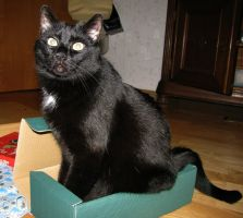 Does that box make me look fat? by CatsWire