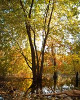 East Branch Autumn Photo by jnati