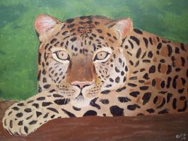 Leopard by sophicardia