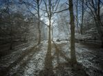 Ashridge in Infrared 3 by bmh1