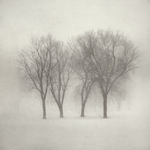 Guardians by intao