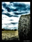 Loire Countryside by grymkrys by Nature-Club
