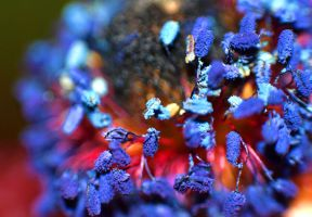 colors of nature macro by willos2