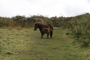 Tintagel Ponies 02 by neverFading-stock