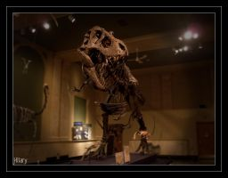 Night at the Museum by Yuvi-Blue