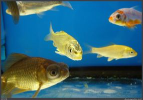 Fish Stock 0074 by phantompanther-stock