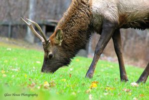 Elk County 11/2013 Part 4 by GlassHouse-1