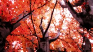 Dance All the Leaves by Ithaedral