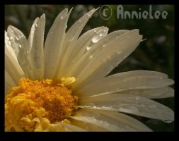 Yellow Drops3 by annielee