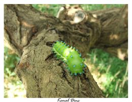 Caterpillar by TuRKoo