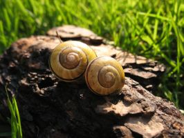 Snail to me by Lunaticca
