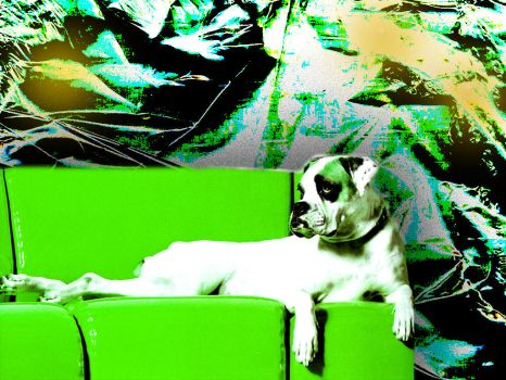 Green Doggy by sompy