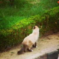 Stray Cat. by Cattrooper