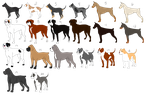 Multi-Breed Dog Sale by Kangaleer-Kennels