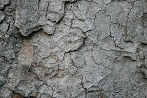 bark texture 01. by greenleaf-stock