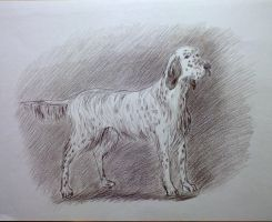 Dog. Sketch. 02 by Cunami-in-october