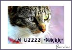 meet lizzy by dien