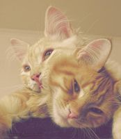 Brothers by tamaraR