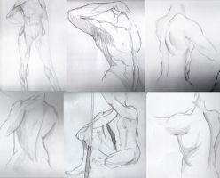 Anatomy studies/references by millegas