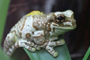 Frog Stock 05 by Malleni-Stock