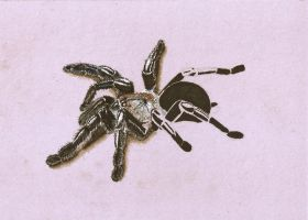 drawing in progress spider 003 by personnedali