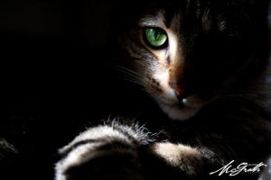 See My Eyes, They Carry You by mcgrath-photography