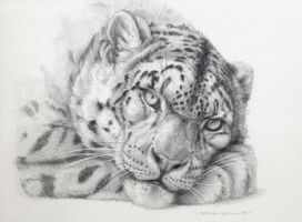 Snow Leopard by sschukina