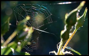Incy wincy spider by lsax001