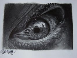 2nd eye by princepen