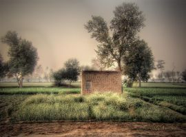 In The Field by abart