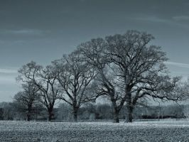 Trees in a field by davepphotographer