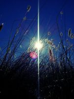 Flaring Grass 07 by ticco77