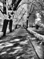 InfraRed Photo 5 by simre