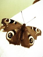 Winter's Butterfly by Ethelle27
