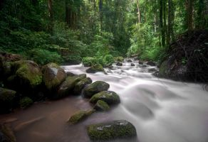 Rainforest River by zeronemike
