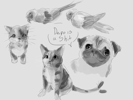 Animals study thing by Spanish-Scoot