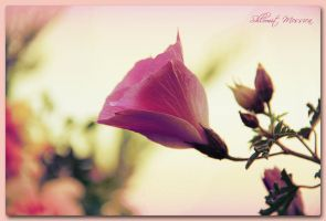 Souvenir of spring by ShlomitMessica