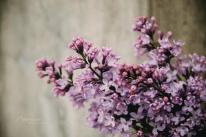 Once upon a spring by marialivia16