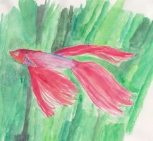 fish in watercolor -- by Zerkatres