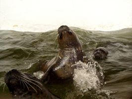 Seals - 03 by Zeds-Stock